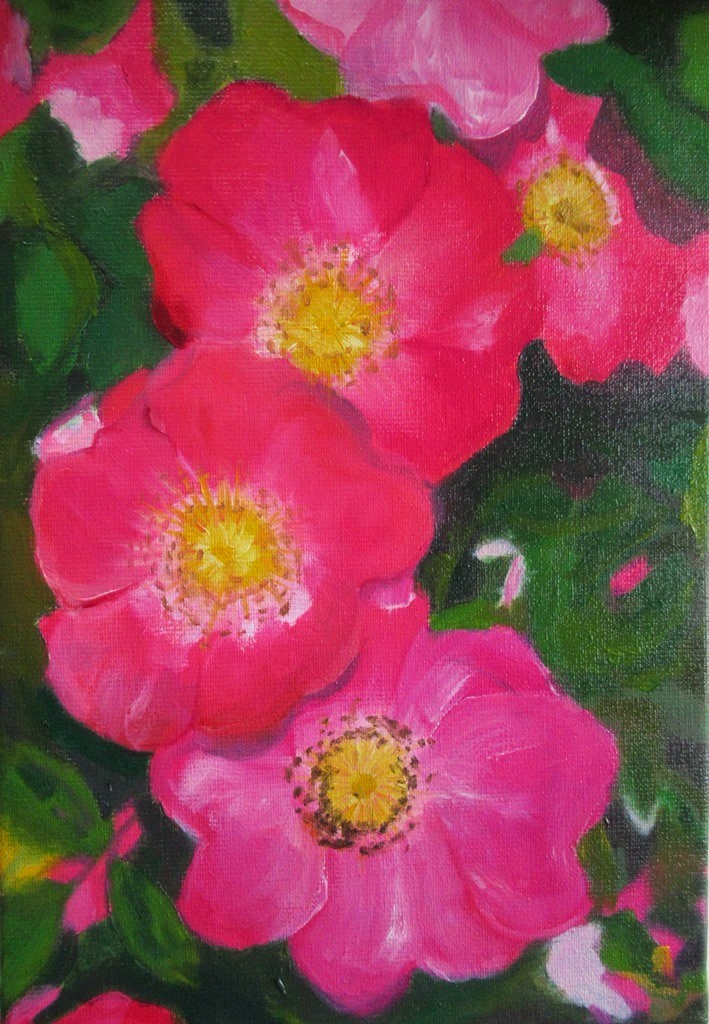 14_Roses sauvages 24x35